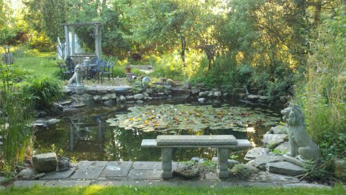 Backyard Frog Pond green frog pond with lilies and lions | susan rozler ~ entertainer