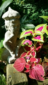Coleus with a garden gnome
